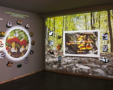 Presentation of the new wing of the Mushroom Museum