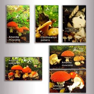 Wooden mushroom magnet
