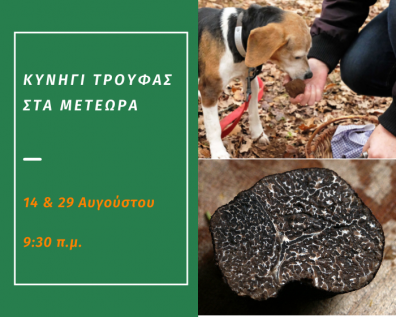 Truffle Hunting on the 14th and 29th of August