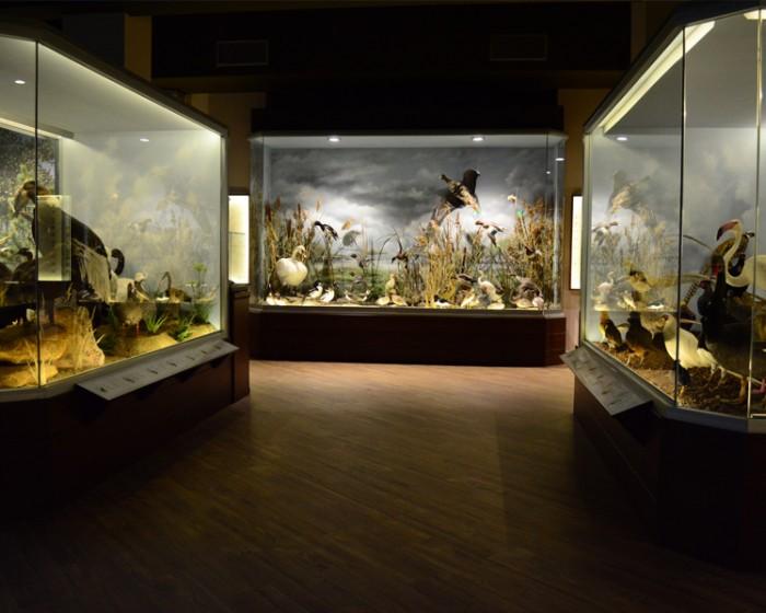 Suspension of Museum's operation