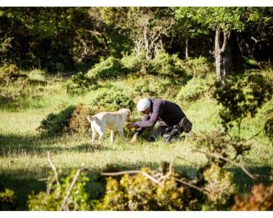 Κυνήγι Τρούφας: Πώς θα λάβετε μέρος
