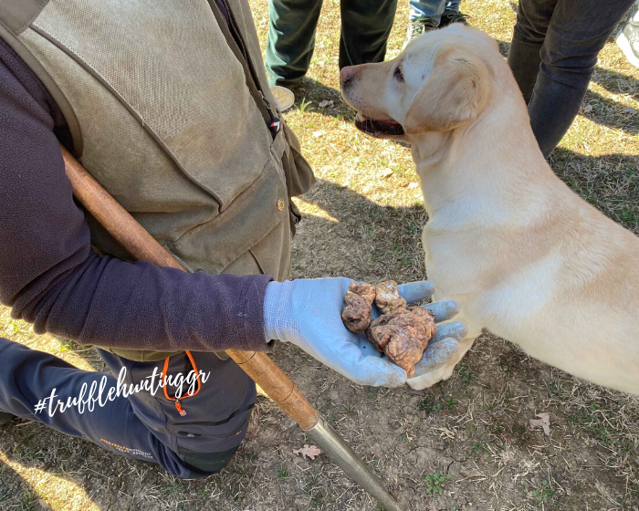 New date added to Truffle Hunting tours schedule