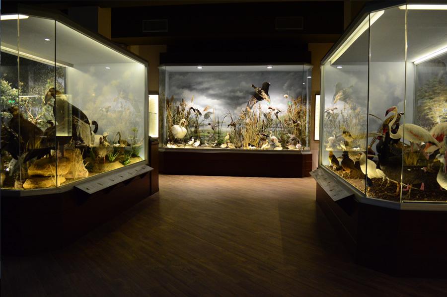 meteora museum