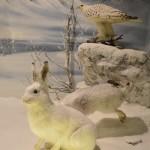 Αρκτικό Τοπίο - διοράματα Μουσείο Φυσικής Ιστορίας Μετεώρων
