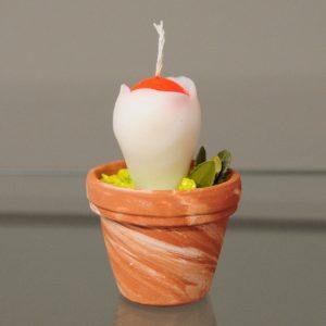 Αμανίτας ο καισαρικός - αρωματικό κερί μανιτάρι