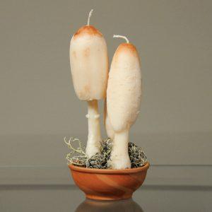 Κοπρίνος - αρωματικό κερί μανιτάρι