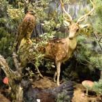 Δάση - διοράματα Μουσείο Φυσικής Ιστορίας Μετεώρων