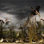 Υδρόβια πουλιά - διοράματα Μουσείο Φυσικής Ιστορίας Μετεώρων