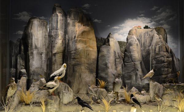 dioramas of natural history museum of meteora and mushroom museum