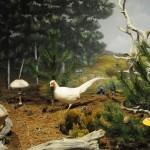 Μανιταροδάσος - διοράματα Μουσείο Μανιταριών