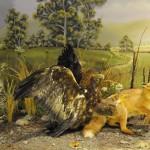 Σκηνές δράσεις & κυνηγιού - διοράματα Μουσείο Φυσικής Ιστορίας Μετεώρων