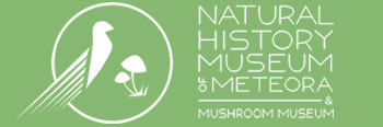 Natural history museum of meteora and mushroom museum
