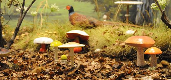 mushroom forest museum