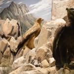 Η ζωή στα βράχια - διοράματα Μουσείο Φυσικής Ιστορίας